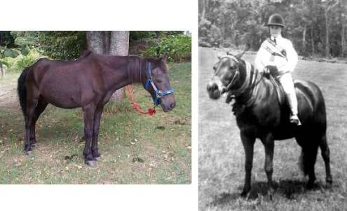 Picture of  Jumbo as 43 year old horse and younger pony